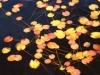「水辺の秋(2)」 撮影者 尾上尚子